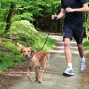 Laisse jogging